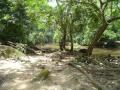 Osun Grove in Osogbo, Nigeria